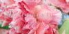 Roicamonta Words Font flower