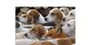 Mini Pixel-7 Font animal carnivore