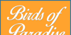 Birds of Paradise  Personal use Font design typography