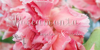 Roicamonta Words Font cake pink
