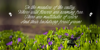 Honeymoon PERSONAL USE Font plant flower