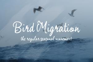 b Bird Migration