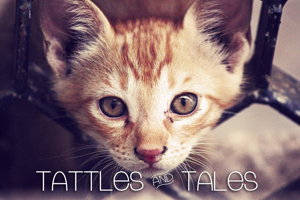 Tattle & Tales