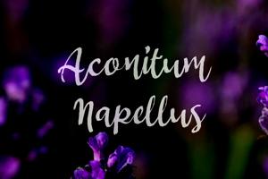 a Aconitum Napellus