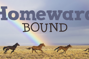 DK Homeward Bound II