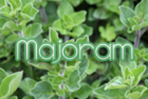 Majoram