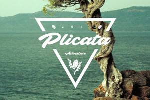 Plicata