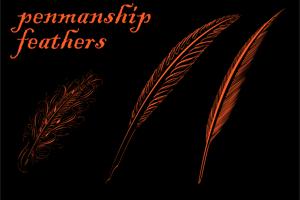 Penmanship Feathers