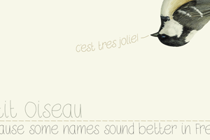 DK Petit Oiseau