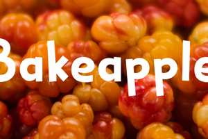 Bakeapple DEMO