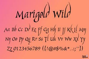 Marigold Wild