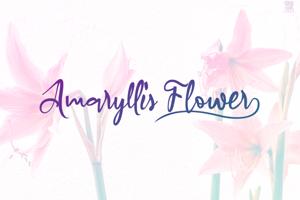a Amaryllis Flower
