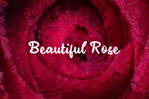 b Beautiful Rose