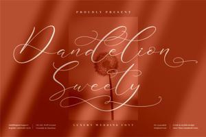 Dandelion Sweety