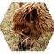 BetsBook avatar