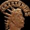 Gallienus avatar
