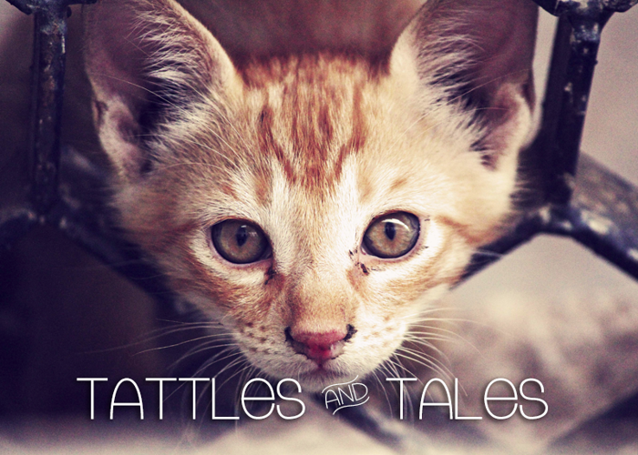 Tattle & Tales Font poster