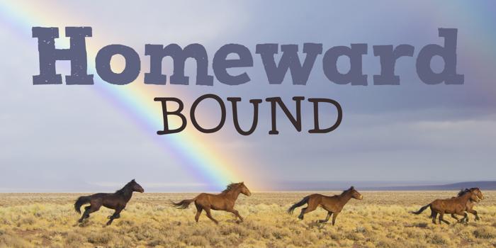 DK Homeward Bound II Font poster