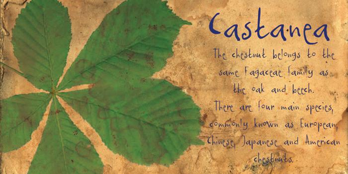 DK Castanea Font poster