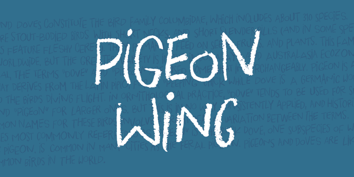 Pigeon Wing DEMO Font poster