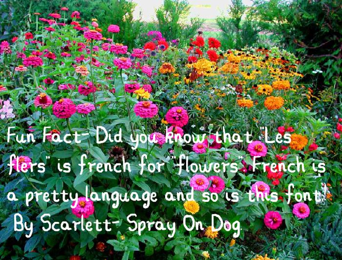 Les Fleurs Font poster