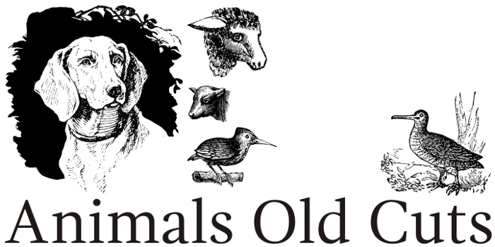 Animals Old Cuts Font poster