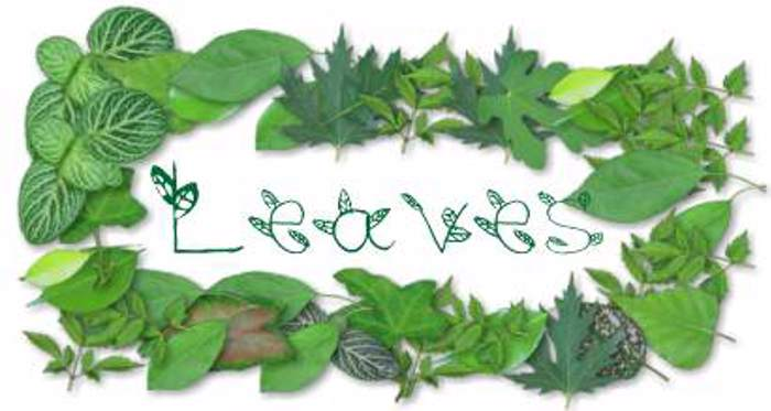 leaves Font poster