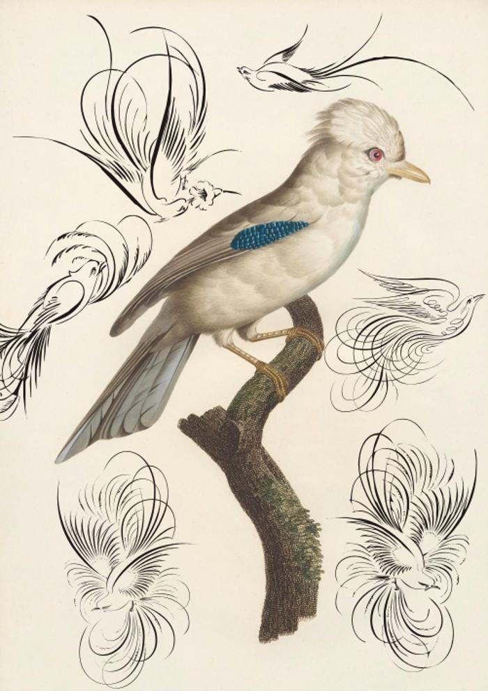 Penmanship Birds Free Font