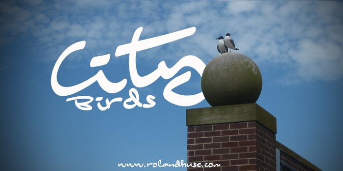 City Birds Font poster