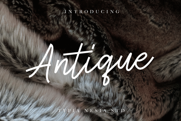 Antique Demo Font cat animal