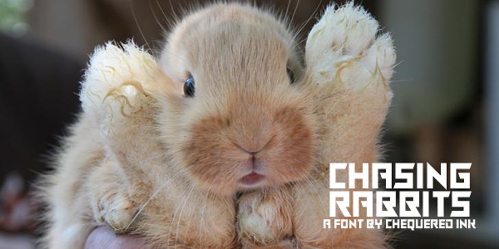 Chasing Rabbits Font animal mammal