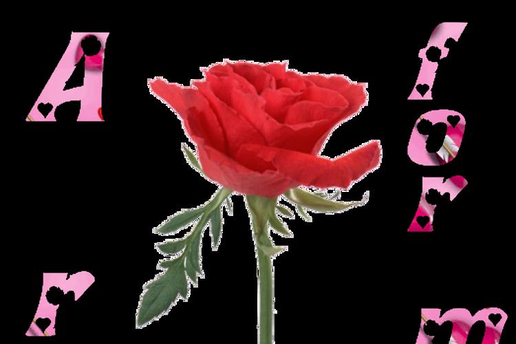 Rose_Heart Font