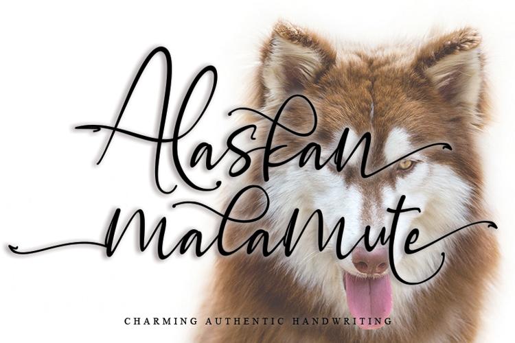 Alaskan malamute Font