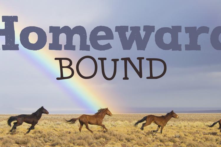 DK Homeward Bound II Font