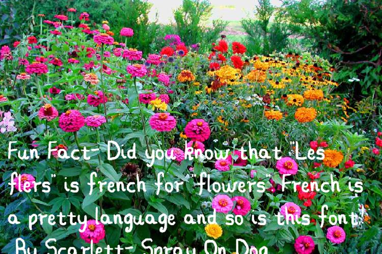 Les Fleurs Font