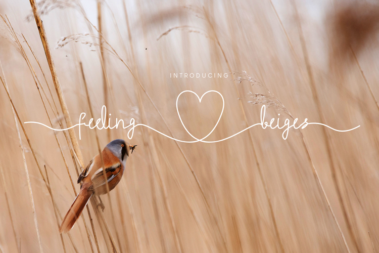 Feeling Beiges Font