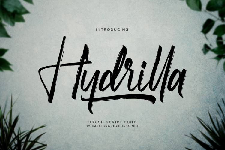Hydrilla Font