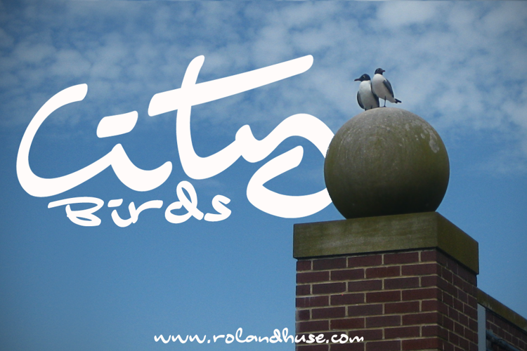 City Birds Font