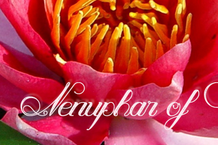 Nenuphar of Venus Font