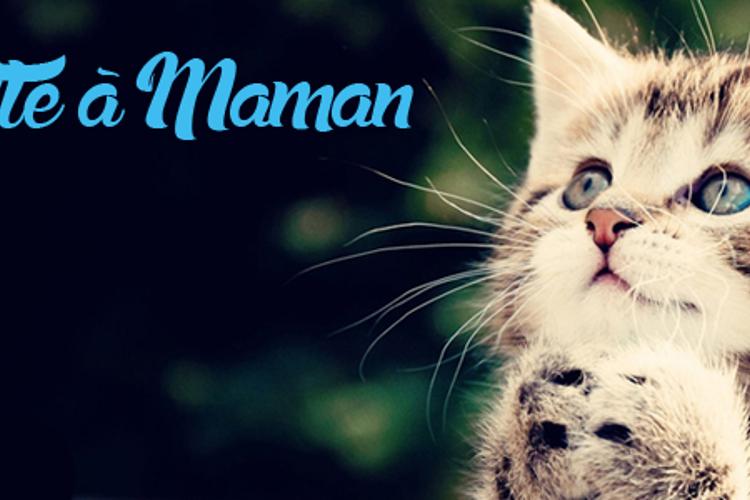 la Chatte à Maman Font