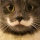 Cats company avatar
